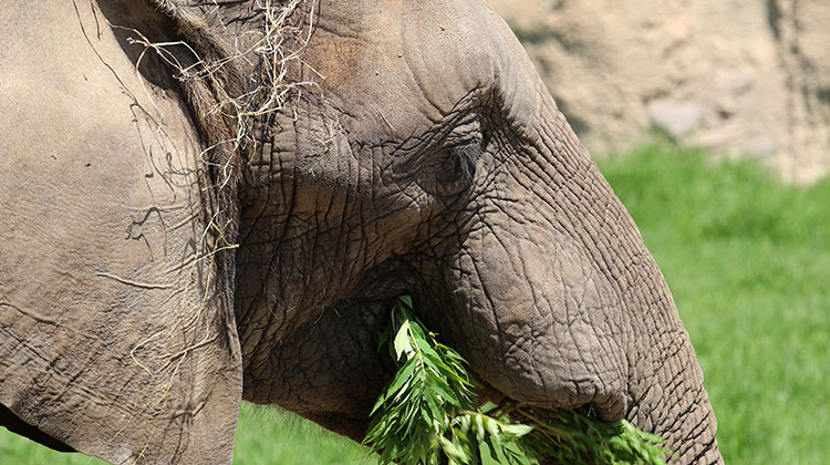 Indianapolis Zoo Says 2 Elephants Beat Deadly Virus
