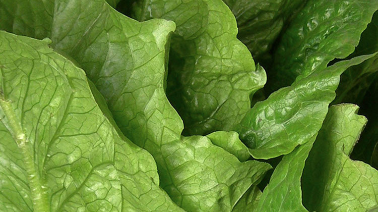 USDA Issues Alert About Salads, Wraps Due To Parasite Worry