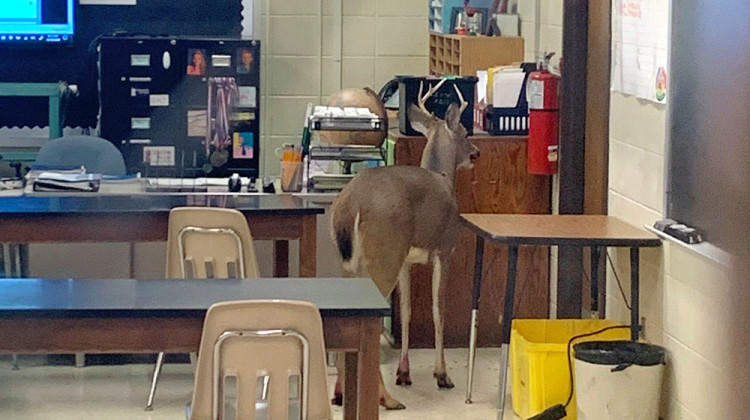 Deer Crashes Through Window, Enters Fort Wayne Middle School