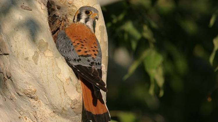 Audubon Report: Over 300 Bird Species at Risk Due to Climate Change