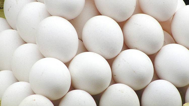 13 states, including Oklahoma, challenge California egg law