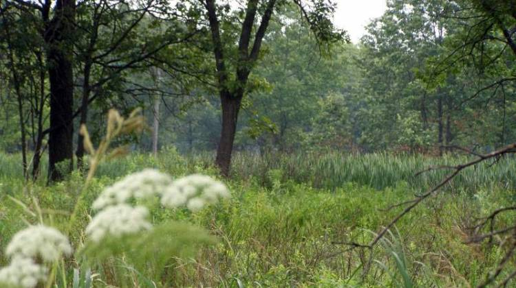 Conservationist Creates Endowment For Indiana Prairie