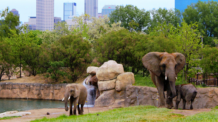 New Conservation Hub, Elephant Exhibit Opening At Indy Zoo