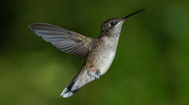 Costa del Golfo Birding: Fort Morgan, Isla Dauphin, Theodore - Alabama Viajes por carretera - Alabama.Travel