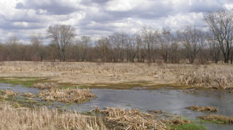 Bill Removing Some Wetland Protections Heads To Governor