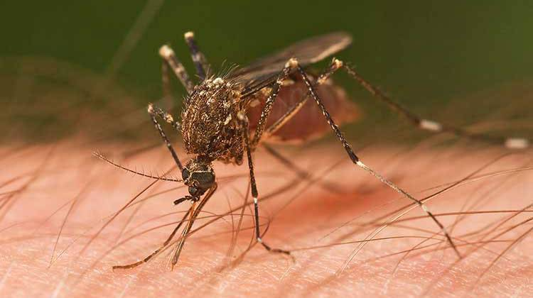 3rd Indiana County Reports Person With West Nile Virus