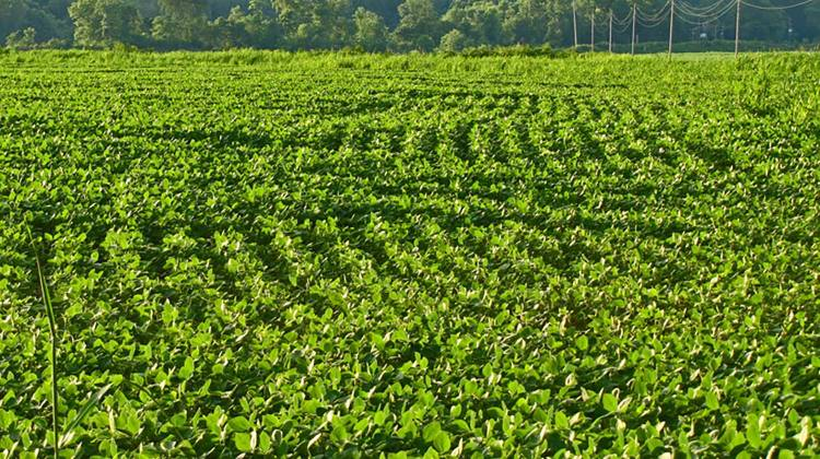 china s newest proposal hits indiana right in the soybeans