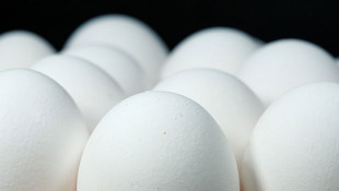 Supreme Court Won't Preside Over Challenge To State Egg Laws