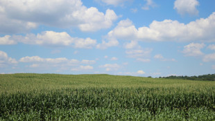 Purdue Land Value Survey Reports Indiana Farmland Values Up