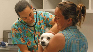 IACS Confrims Spike In Parvo, Urges Owners to Vaccinate Pets