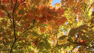 DNR: Cold Snap Will Spark Delayed Fall Foliage Spectrum