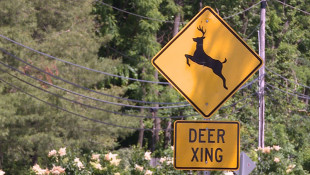 Seasonal Deer Population Hike Increases Risk For Hoosier Drivers