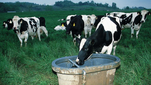 Organic Dairy Proposing CAFO Hopes New Tech Will Calm Drinking Water Fears