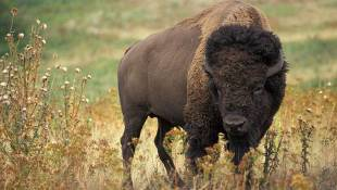 Hoosier National Forest Creates Buffalo Trace Story Map