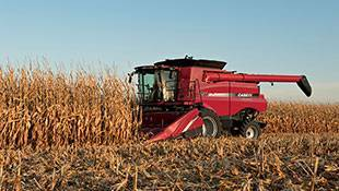 USDA Lowers Corn Yield Forecast; Soybeans Should Still Set Records