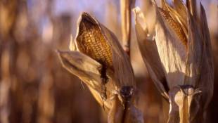 Record Harvest Underway, But Profits Lag Behind Best Years