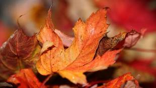 Leaf Collection Begins Nov. 7 In Marion County