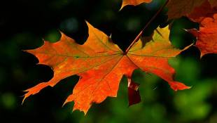 DNR: Unseasonably Warm Fall Delays Full Range Of Fall Colors