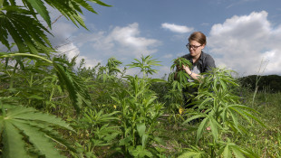 Purdue University Hires First Extension Hemp Specialist