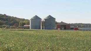 Low Grain Prices Hit Home As Indiana Farmland Value Drops