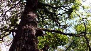 Charity Offers To Buy VA Property To Save Old Trees