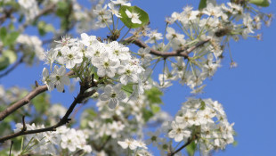 DNR: Adding Popular Tree Species Would Delay Invasives Ban