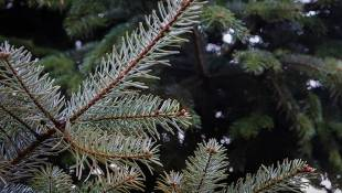 Here's Where You Can Take Your Live Tree After Christmas