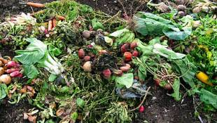 With New Grant, Composting Key To Reducing Food Waste