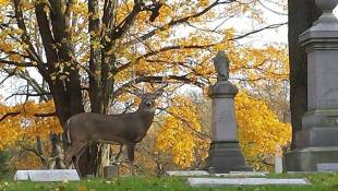 Indianapolis Cemetery Posts Signs To Deter Deer Hunters