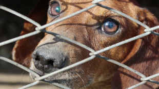 Senate Approves Scaled-Back Animal Cruelty Bill