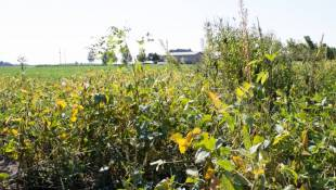 Dicamba Poses Tough Questions, Few Answers For Farmers, Regulators