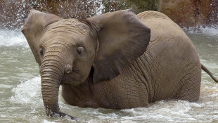 Indianapolis Zoo: Young Elephant Dies After Brief Illness