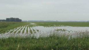 Crop Report: More Heavy Rains Leave Indiana Crops Drenched