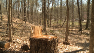 Survey: Indiana Approaches Forestry Like Other Professionals In North America