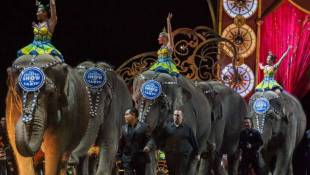 Ringling Bros. Circus Holds Final Shows Featuring Elephants