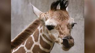 The Indianapolis Zoo Wants Your Help Naming A Baby Giraffe