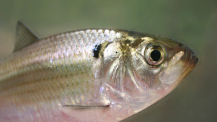 Study: More Forests, Fewer Farms Led To More Ohio River Fish