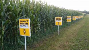 Indiana Grain Councils Defend GMOs Amid Doubt About Success