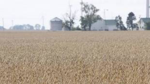 Months Of Wonky Weather Could Delay Indiana's Harvest