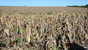Climate Shifts Could Hurt Indiana Corn