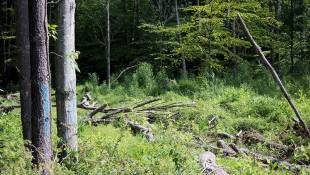 Hoosiers Debate Use Of State Forests As Logging Rates Increase