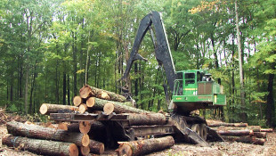 Indiana Hardwoods Assessment Shows Room For Growth, Concerns Environmentalists
