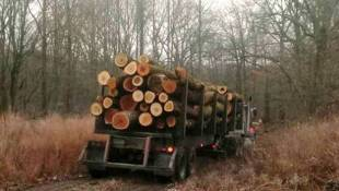 DNR Confirms Yellowwood Logging Is Underway