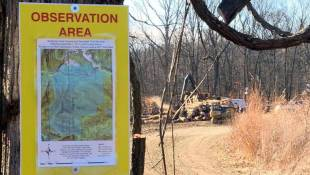 Protests In Yellowwood State Forest Die Down As Logging Begins