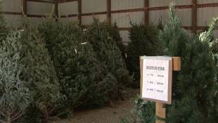 National Christmas Tree Shortage Impacting Hoosiers