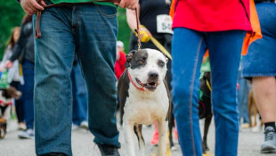 Mutt Strutt Returns to In-Person Event This Fall