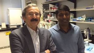 Indy Nanotech Scientists Develop Blood Test For Pancreatic Cancer