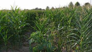 Purdue-led Project Helps Farmers Adapt To Climate Change