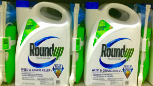 EPA Says Roundup Ingredient Is Safe Despite Lawsuits