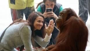 Indianapolis Zoo Orangutan Exhibit Nominated For 'USA Today 10Best'